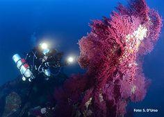 Centro Immersioni Scuba Point Palau #GreenWhereabouts #sardegna #CentroImmersioni #immersioni #ImmersioniSubacquee #ScubaDiving #scuba #diving