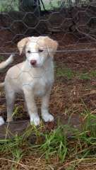 162 Best Border Collie puppies images in 2016 | Collie puppies for