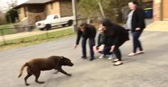 Lost Dog Reunited With His Family After Five Long Years via LittleThings.com