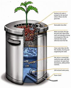 Aquaponics System Using A 5 Gallon Bucket. Aquaponics produces food better than any farming system mankind has come up with so far. Aquaponics is the latest evolution of Hydroponics. Aquaponics System, Aquaponics Diy, Aquaponics Greenhouse, Homemade Hydroponics, Best Fish For Aquaponics, Farming System, Hydroponic Growing, Hydroponic Gardening, Organic Gardening