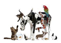 """''Acho que os 40 mil milhões de dólares que a humanidade gasta anualmente em comida para animais de estimação (...) são gastos, realmente, em saúde mental, qualidade de vida e """"injecções de bom-humor"""" para os humanos.'' Ler artigo: checkthisout.me/BlogdeRuiGabriel-40000milhoes-em-saudemental"""