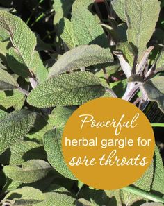 If your sore throat leaves you wincing in pain when you swallow, try this powerful herbal gargle for sore throats. It worked wonders for me!