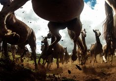 The Most Spectacular Wildlife Photos From The National Geographic Traveler Photo Contest