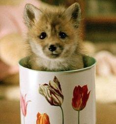 Fox in a tea cup thank you please.