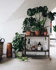 Bar cart full of plants and gin in a cosy Danish loft.