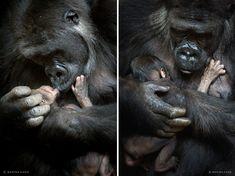 """Marina Cano est une Photographe de Nature talentueuse à la renommée internationale, spécialisée dans la """"Capture"""" d'Animaux Sauvages. Ses Aventures l'ont menée dans divers pays d'Afrique et d'Europe pour photographier les animaux dans leur habitat naturel."""