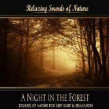 awesome NEW AGE – Album – $0.99 –  A Night in the Forest (Nature Sounds)