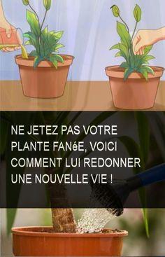 Ne jetez pas votre plante fanée, voici comment lui redonner une nouvelle vie ! #Plante #Comment #Vie #Jetez #Jete #Ete #Fanee Permaculture, Plantar, Houseplants, Interior Design Living Room, Aloe Vera, Voici, Planter Pots, This Or That Questions, Plantation