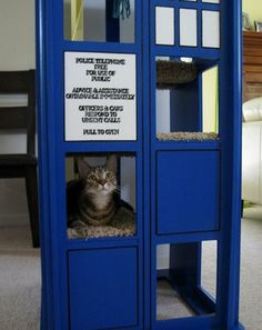 my cats house when i get my own space