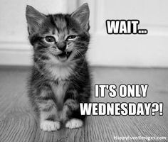 Funny Wednesday memes are about Wednesday because this day you have in-between feelings, still got two days to work and almost near the weekend. Scroll down for these Wednesday memes that will totally reflect your Funny Wednesday Quotes, Wednesday Humor, Its Friday Quotes, Funny Quotes, Happy Wednesday, Wednesday Greetings, Morning Quotes For Him, Morning Memes, Funny Good Morning Quotes