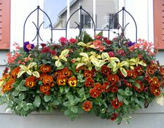 Backboard for Hayracks - Backboards give background support to flowers and vines in hayracks, especially where hayracks are used on railings or under windows. Decorative Gothic design adds height and interest.