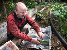 - Du blir lykkelig av å dyrke salat  lettstelte poteter til hagen.  Unngå luking med avispapir.