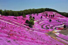 Parc national Takino Suzuran Hillside, Sapporo, Hokkaido