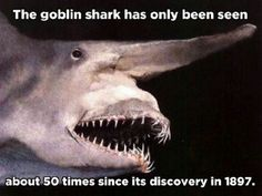 Kinda makes me wonder if its actually a  separate species or if its just like a genetic defect in a more common type of shark- kinda like chromosomal abnormalities in humans often resulting in visible deformities... Must look into it later