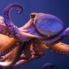 close up of octopus.