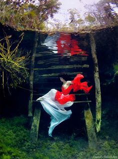 photographer unknown...i love how this image is surreal looking in a clear lake...so very pretty!...-eh
