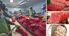 Studies suggest that all bluefin tuna caught off the U.S. West Coast are likely carrying radioactive isotopes from the 2011 Fukushima disaster. That's just one more reason to avoid eating Pacific bluefin tuna, which are considered critically endangered. Over-fishing has reduced their population to only 3.6 percent of its historic levels. It is unknown what …