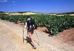 walking the camino - - Yahoo Image Search Results