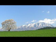 青空に映える 小岩井 一本桜 と 岩手山