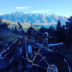Suns out. Bike and hound out. #Queenstown #mountains #wanderlust #mountainbiking