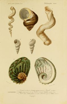 Atlas: v. 3, Ed. 2 - Zoologie, Botanique, Astronomie & Meteorologie - Dictionnaire universel d'histoire naturelle résumant et complétant tous les faits présentés par les encyclopédies,... / - Biodiversity Heritage Library