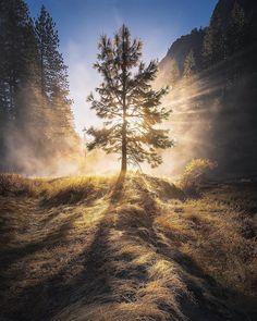 Yosemite National Park, USA   Photo by @shainblumphotography