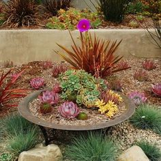 Easy Desert Landscaping Tips That Will Help You Design A Beautiful Yard Succulent Landscaping, Modern Landscaping, Landscaping Tips, Front Yard Landscaping, Succulents Garden, Houzz, Cactus, Drought Tolerant Landscape, Modern Landscape Design