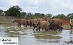 Zur Regenzeit ist das Ithumba-Wasserloch mit reichlich Wasser gefüllt. Nairobi, Elephant, Animals, 3 Year Olds, Rainy Season, Elephants, National Forest, Animales, Animaux