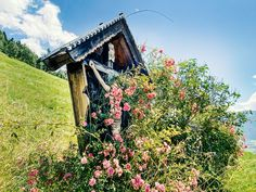 Bewundere die blühenden Blumen und Sträucher auf den Wanderwegen in Piesendorf Niedernsill. #bergevollerschätze #mountainsfulloftreasures #piesendorf #niedernsill House Styles, Summer, Nature, Flowers