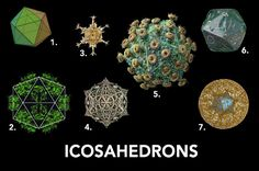 ICOSAHEDRONS: 1) The icosahedron Platonic solid; 2) a chlorophyll protein from a pea ; 3) Circogonia icosahedra radiolaria (a single cell organism living in water); 4) also a radilarian organism; 5) the AIDS virus; 6) ancient roman dice; 7) a drawing of a hyperbolic icosahedron.