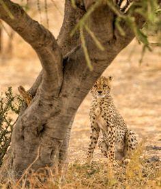 Cub in Hiding by JacoMarx #animals #animal #pet #pets #animales #animallovers #photooftheday #amazing #picoftheday