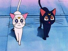 Diana Sailor Moon, Sailor Moon Cat, Sailor Moon Aesthetic, Aesthetic Anime, Sailor Moon Episodes, Luna And Artemis, Sailor Mercury, Sailor Scouts, Cute Doodles