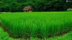 Image result for vietnamese forest