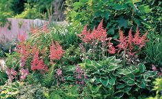 Wer die richtigen Pflanzen wählt, kann im Schatten üppige Beete gestalten, die gerade im Hochsommer viel zu bieten haben. Hierfür bieten sich neben Blattschmuckstauden vor allem auch schattenverträgliche Blütenstauden an.