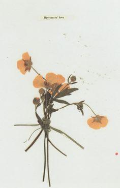 Dried Flowers, Mark Borthwick.