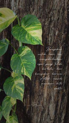 Beautiful Words Of Love, Love Words, Instagram Ideas, Instagram Story, Plant Leaves, Plants, Photography, Words Of Love, Photograph