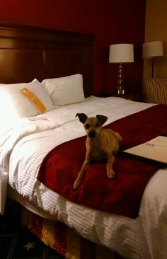 Wyndham Gettysburg is pet friendly. Scooby approved!