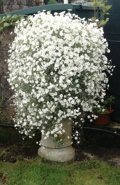 Container garden all white #containergardening