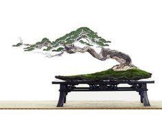 Bonsai.. #bonsai...