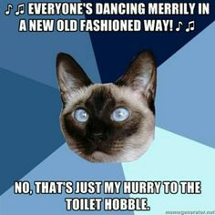 Chronic Illness Cat Christmas potty hobble.
