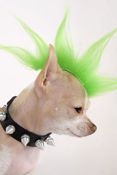 Humans aren't the only ones able to celebrate Halloween. Let your dog join in on the fun too. Dress your dog in one of these creative and funny dog Halloween costumes for a truly memorable holiday. Chihuahua Costumes, Pet Costumes For Dogs, Cat Costumes, Costume Ideas, Funny Dog Costumes, Punk Costume, Animal Costumes, Fairy Halloween Costumes, Fete Halloween