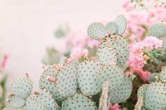 It doesn't get much prettier than cacti covered in the sweetest peachy pink bougainvillea! This dreamy statement large format art is sure to add some warmth to any space. Food Coloring Mixing Chart, Cactus Pictures, Desert Flowers, Cactus Print, Cactus Flower, Cacti And Succulents, Wall Prints, Iphone Wallpaper, Bloom