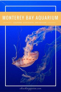 Our kids are animal lovers, so we made sure to stop at the Monterey Bay Aquarium. Tickets can be quite expensive, so like I normally do,  I searched for some Monterey Bay Aquarium Coupons and Discounts.  Here is a review and roundup of discounts for the Monterey Bay Aquarium.