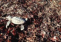 Watch this little guy go! via USFWS