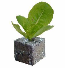 Inexpensive and easy veggies to grow yourself