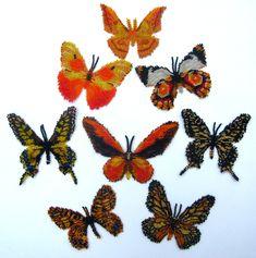 8 Yellow Lepidopteras