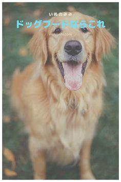 ほとんどのサイトでは、全てのランキング審査基準を公開していません。 その結果、サイト運営者が自在に順位を操作できる客観性0のランキング記事ばかりが蔓延。  なので、ここではシニア向けドッグフードを選ぶ下記3つ審査基準を設け客観性を重視、全て公開します。 Dog Food Recipes, Dogs, Animals, Animais, Animales, Animaux, Pet Dogs, Dog Recipes, Doggies
