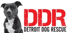 These guys are doing incredible work in a city that is overrun with stray and needy dogs.