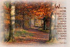 Weis mir, Herr, deinen Weg, dass ich wandle in deiner Wahrheit ... Psalm 86, 11
