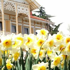 Yellow Manor İstanbul